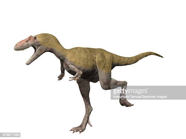 Albertosaurus sarcophagus is a theropod dinosaur from the Late Cretaceous of Alberta, Canada.