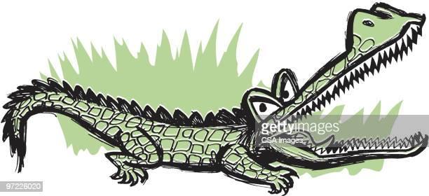 alligator - aggression stock illustrations