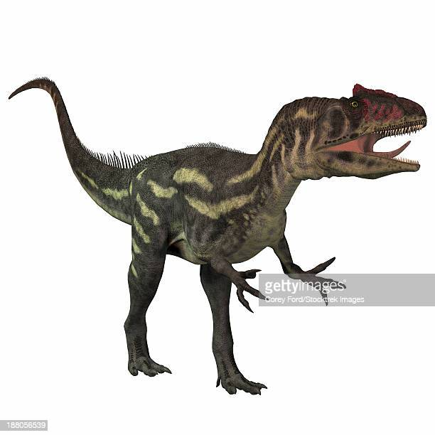 Allosaurus, a large theropod predatory dinosaur that lived in the late Jurassic period.