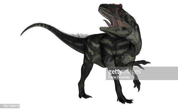 allosaurus dinosaur roaring, isolated on white background. - talon stock illustrations