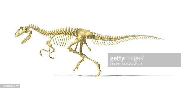 Allosaurus dinosaur skeleton, artwork