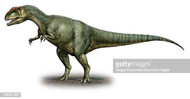 Allosaurus fragilis, a prehistoric era dinosaur from the Late Jurassic period.