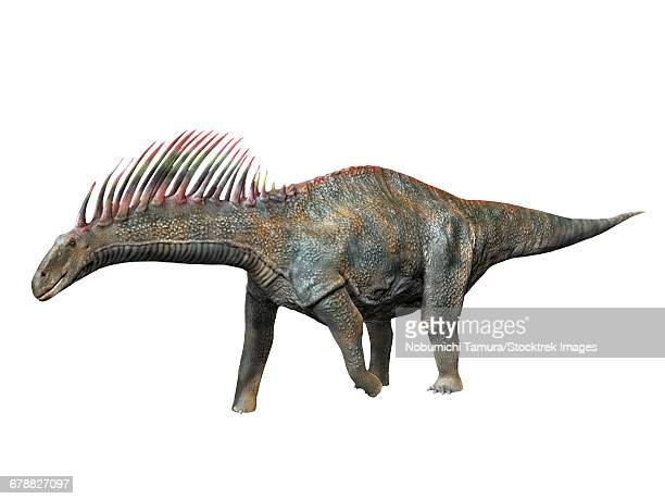 amargasaurus cazaui is a sauropod dinosaur from the early cretaceous period of argentina. - animal spine stock illustrations, clip art, cartoons, & icons