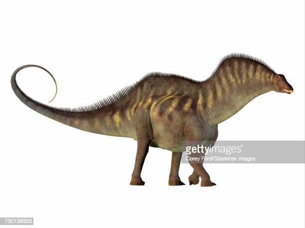Amargasaurus dinosaur, side profile.