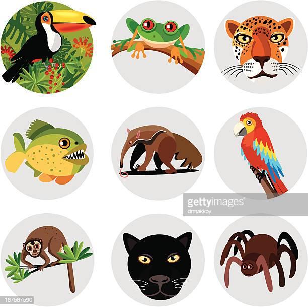 Amazon symbols