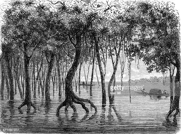 Amazonas flooding forest