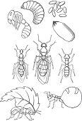 Ameisen (Entwicklung und Arten)