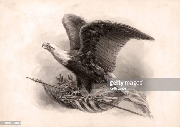 illustrations, cliparts, dessins animés et icônes de american bald eagle, oiseau national des états-unis - aigle