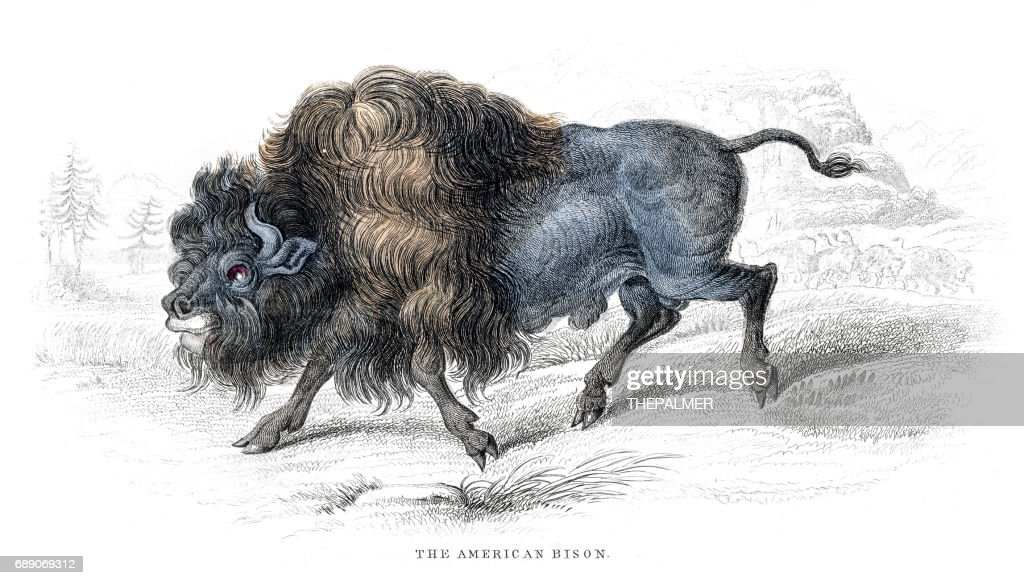 American bison lithograph 1884 : Stock Illustration