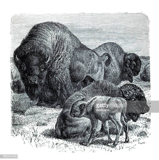 american bison with family - european bison stock illustrations, clip art, cartoons, & icons