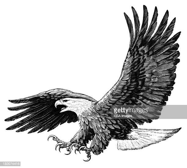 american eagle - eagle bird stock illustrations, clip art, cartoons, & icons