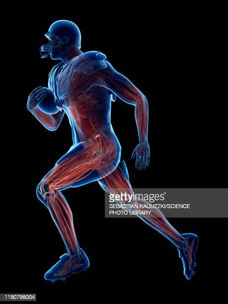 american football player's muscles, illustration - human muscle stock illustrations