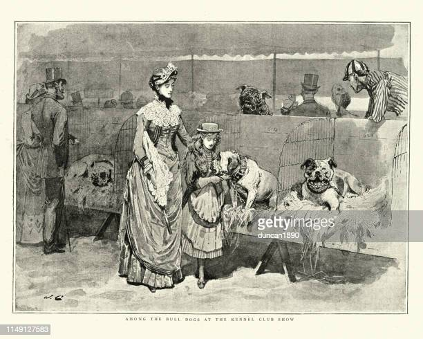 amoung the bull dogs at the kennel club show, 19th century - dog show stock illustrations