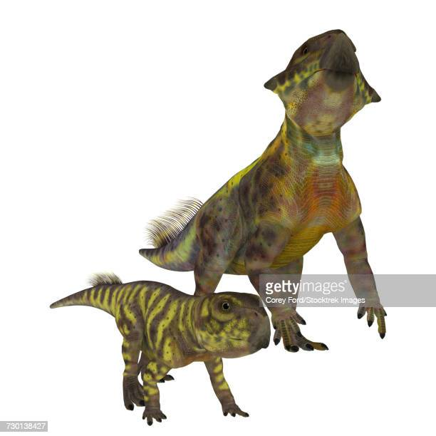 An adult Psittacosaurus dinosaur with offspring.