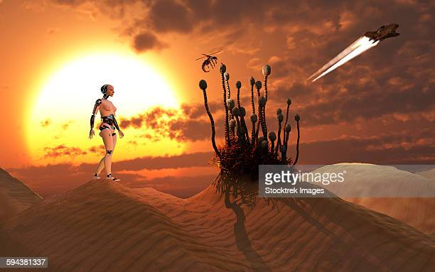 An android harvesting a rare plant on a desert alien world.