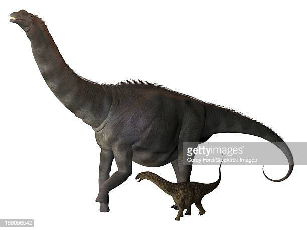 An Argentinosaurus and juvenile. Argentinosaurus was a titanosaur sauropod dinosaur from the Cretaceous epoch in Argentina.