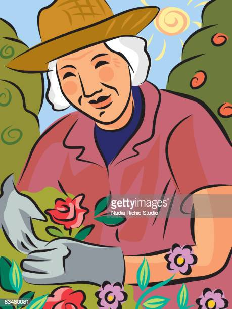 an elderly woman gardening - gardening glove stock illustrations, clip art, cartoons, & icons