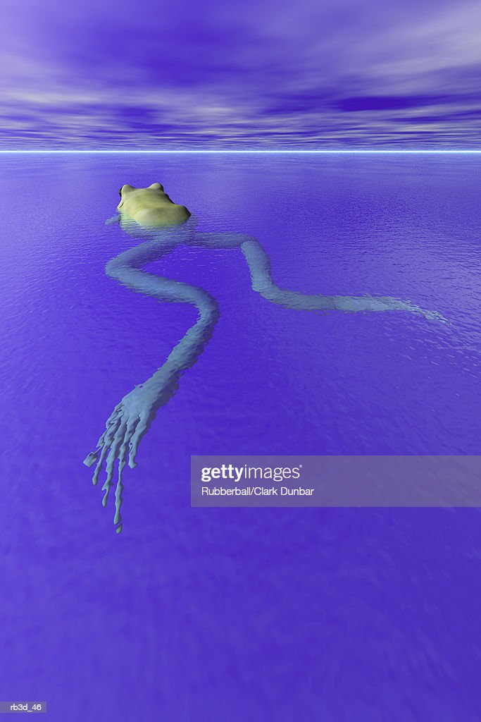 an elongated frog swims in calm blue water : Stockillustraties