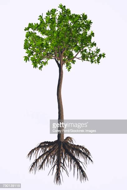 ilustraciones, imágenes clip art, dibujos animados e iconos de stock de an extinct glossopteris plant on white background. - animal extinto