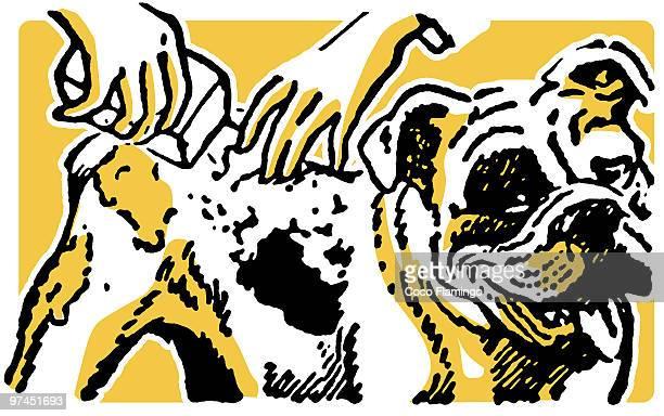 An illustration of a Bulldog having a wash