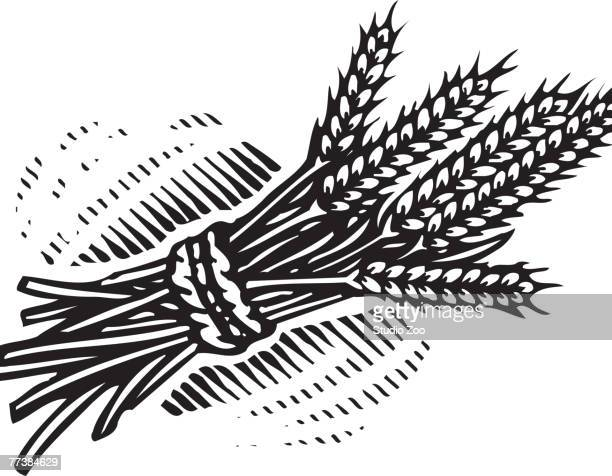 an illustration of a bundle of wheat illustrated in black and white - plant stem stock illustrations