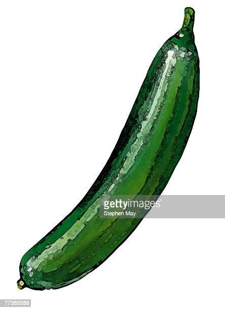 an illustration of a cucumber - cucumber stock illustrations, clip art, cartoons, & icons