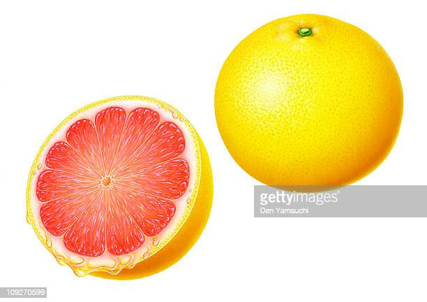 An illustration of a grapefruit whole and halved
