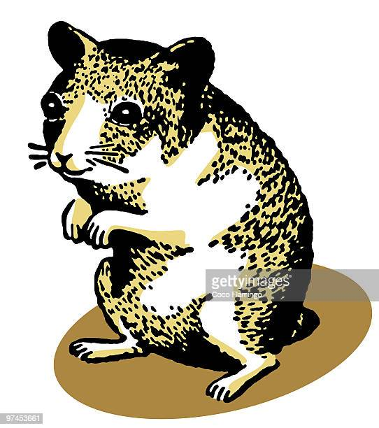 an illustration of a hamster standing on its hind legs - animal body stock illustrations, clip art, cartoons, & icons