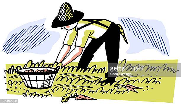 an illustration of a man working in the fields - bending over stock illustrations, clip art, cartoons, & icons