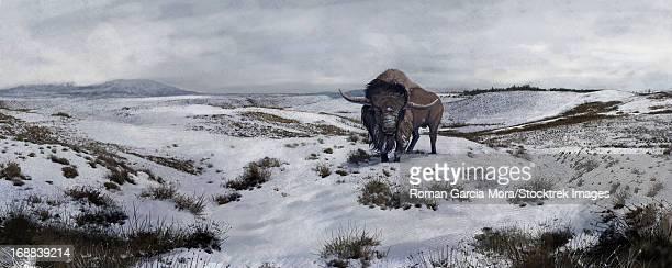 ilustraciones, imágenes clip art, dibujos animados e iconos de stock de an old bison latifrons falls behind in a winter landscape during the north american pleistocene epoch. - paleobiología
