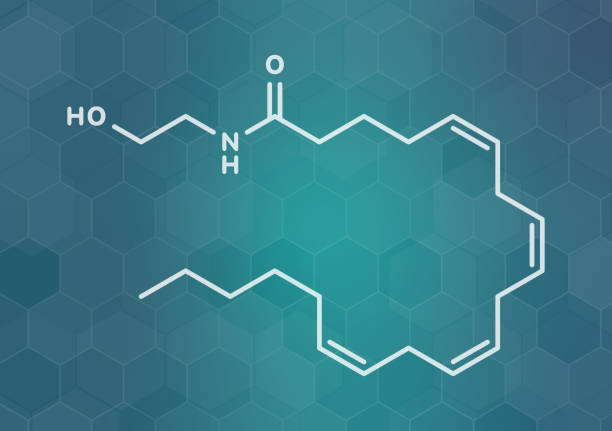 Anandamide neurotransmitter molecule, illustration