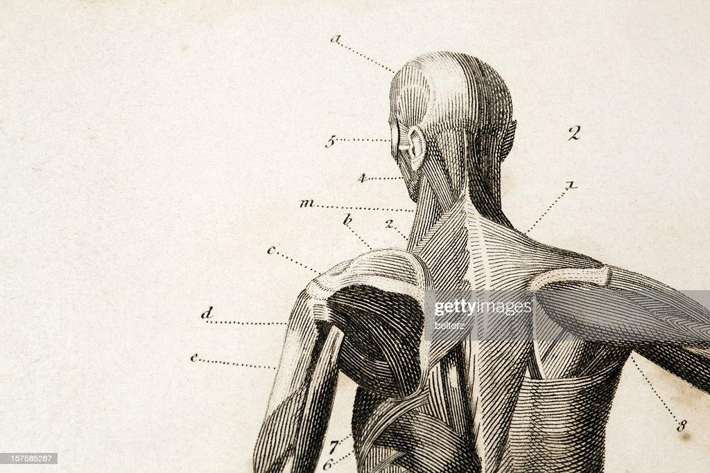 Anatomy engraving : Stock Illustration