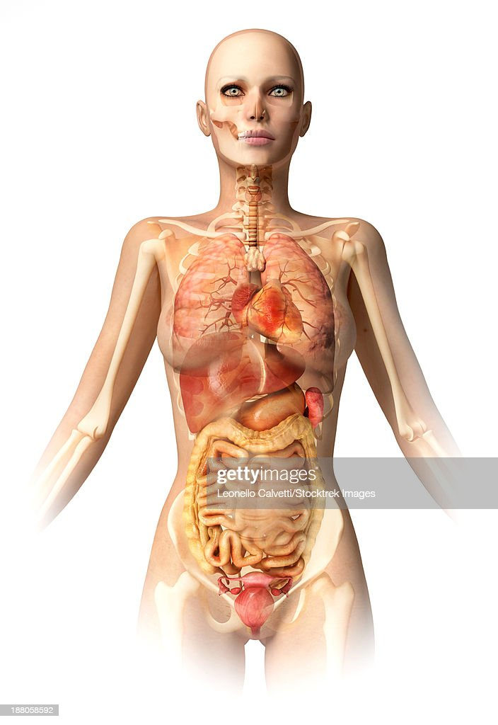 Anatomy Of Female Body With Bone Skeleton And All Internal Organs
