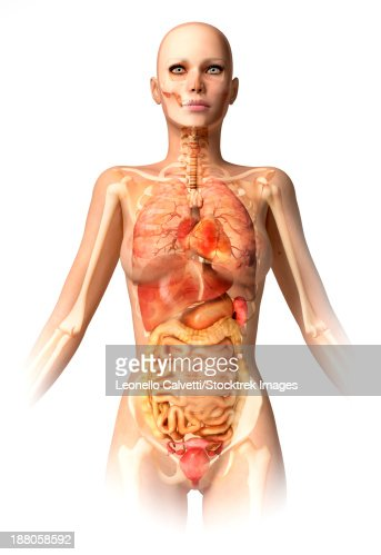 Human Female Body In Dynamic Posture With Full Lymphatic System