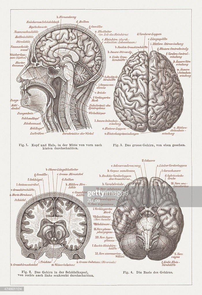 Großartig Halsmuskelanatomie Diagramm Ideen - Menschliche Anatomie ...