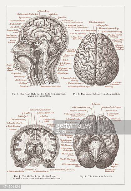 anatomy of the human brain, lithograph, published in 1876 - frontal lobe stock illustrations, clip art, cartoons, & icons