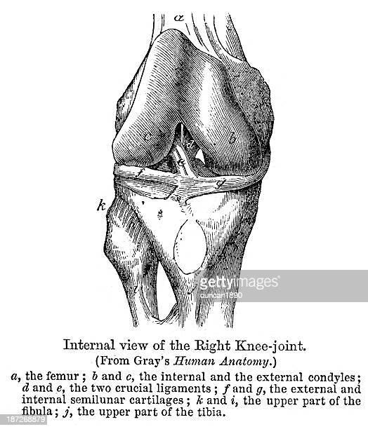 部位-右膝関節 - 人体図点のイラスト素材/クリップアート素材/マンガ素材/アイコン素材