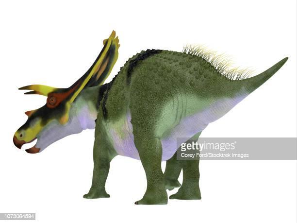 Anchiceratops dinosaur, rear view.