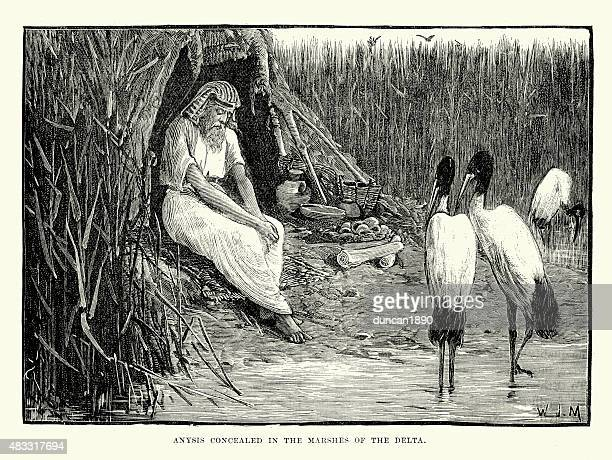 ancient egypt - anysis concealed in the marshes - herodotus stock illustrations
