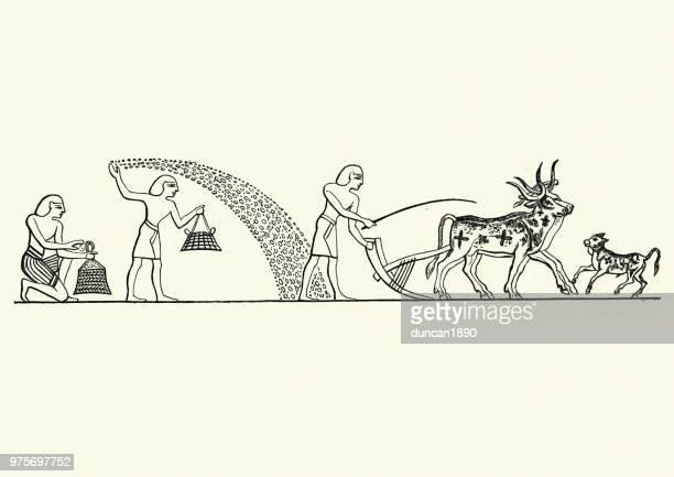 ilustrações, clipart, desenhos animados e ícones de agricultores egípcios antigos sementeira de culturas e arando o campo - egito