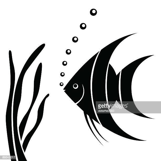 angel fish - angelfish stock illustrations, clip art, cartoons, & icons