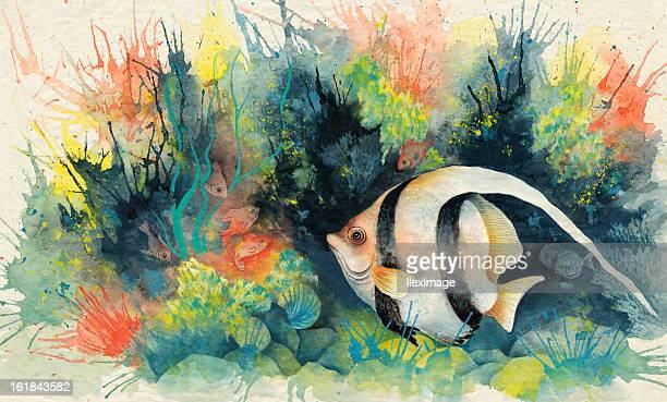 angelfish - angelfish stock illustrations, clip art, cartoons, & icons