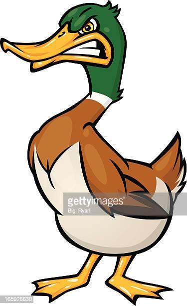 bildbanksillustrationer, clip art samt tecknat material och ikoner med angry duck - duck