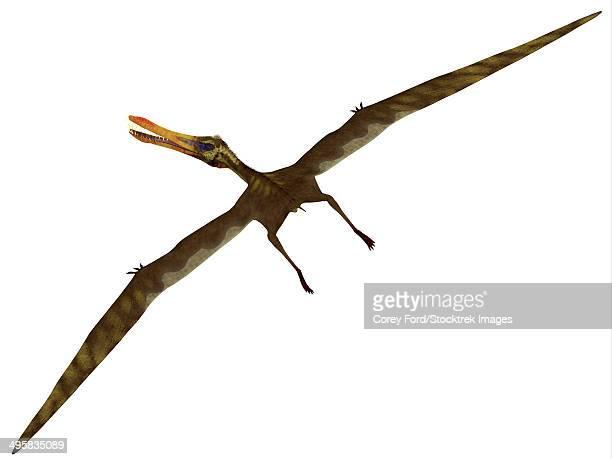 ilustraciones, imágenes clip art, dibujos animados e iconos de stock de anhanguera was a fish-eating pterosaur from the cretaceous era of brazil. - triásico