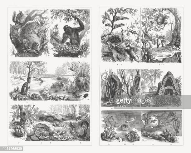 Animal homes, wood engravings, published in 1897