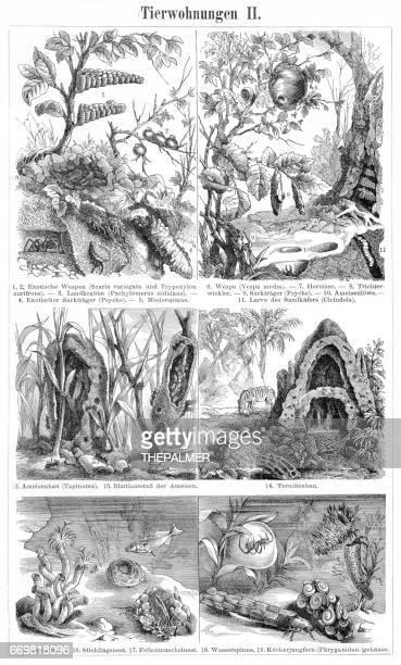 illustrazioni stock, clip art, cartoni animati e icone di tendenza di nido di animali e incisione di case 1895 - nido di vespe