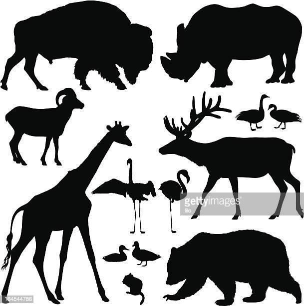 animal silhouettes - chipmunk stock illustrations