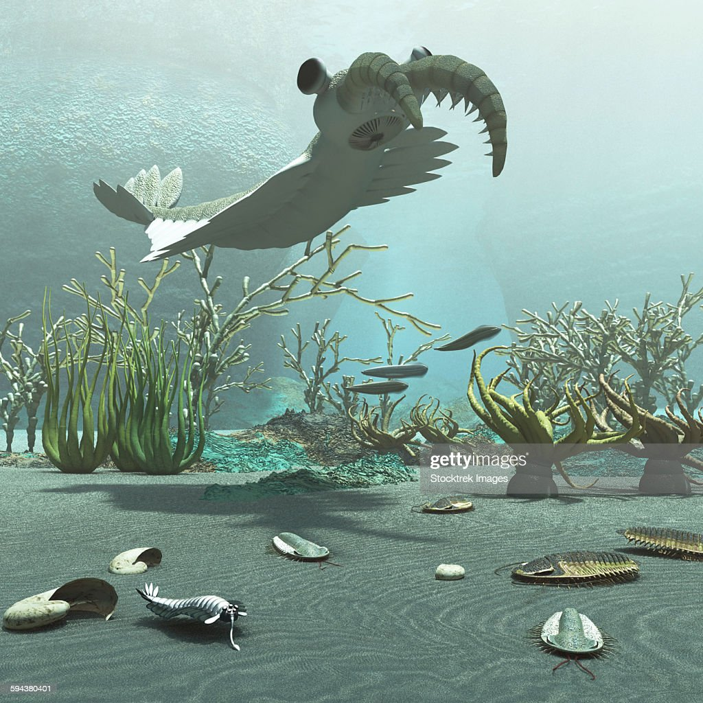 Animals and floral life from the Burgess Shale formation of the Cambrian period. : stock illustration