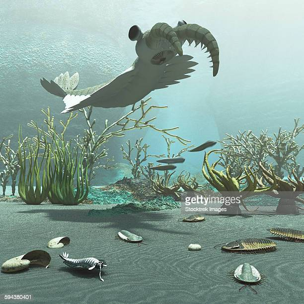 Animals and floral life from the Burgess Shale formation of the Cambrian period.