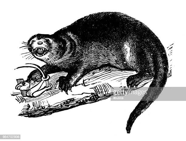 otter stock illustrations and cartoons